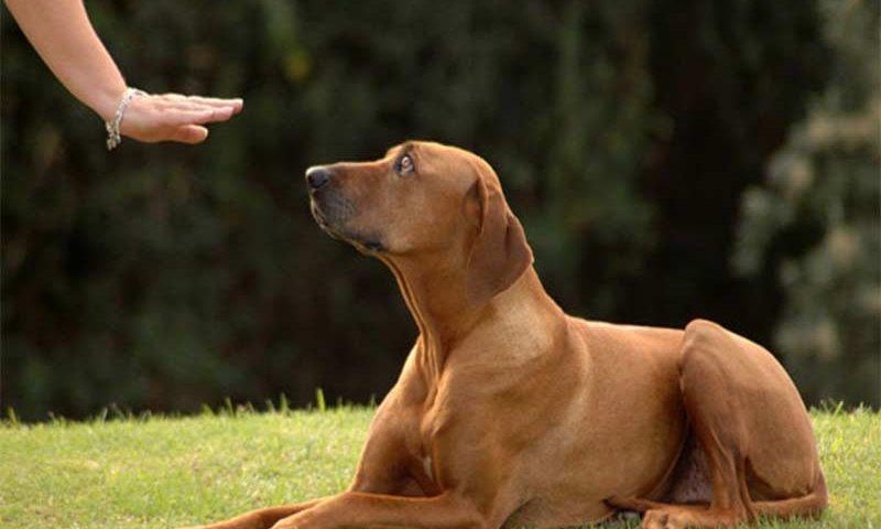 Η επιστήμη της εκπαίδευσης σκύλων